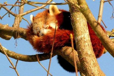 Где взять старую версию Mozilla Firefox?